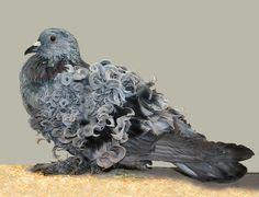 Pet Pigeon, Pigeon Loft, Dove Pigeon, Types Of Pigeons, Pigeons For Sale, Pigeon Pictures, Pigeon Breeds, Fancy Rat, Flying Squirrel