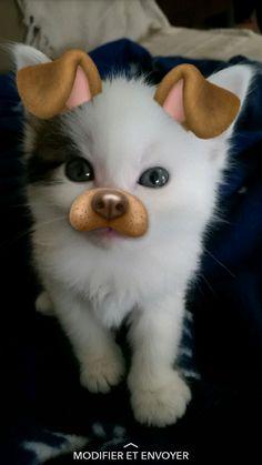 snapchat chat mignon filtre chien