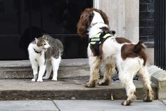 INCOMING PM Theresa May has vowed to keep Downing Street's Chief Mouser Larry the Cat in his job when she gets the keys to No 10, The Sun can reveal. After fears Larry could be fur the chop, Mrs Ma…