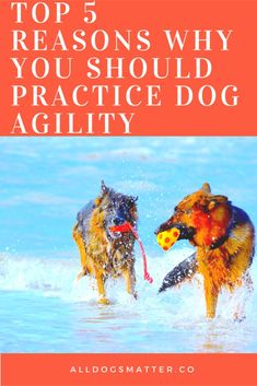 Things That Make You Love And Hate Dog Agility. @KaufmannsPuppy
