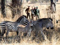 TenaTena   Signature African Safaris