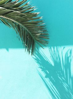 Palm leaf & shadow.
