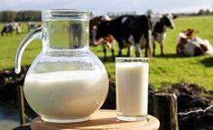 6 gute Argumente, Milch zu meiden