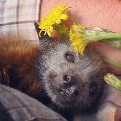Safe now, little Bat. Rest your head among the flowers.