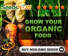 Where can you buy non-gmo seeds or seeds from companies that aren't owned by Monsanto.    Monsanto owns something like 90-95% of the seed companies out there. So the company might not be selling genetically engineered seeds, the money is still going into the pockets of Monsanto. I'm not down with that.