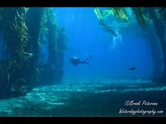 Adobe Lightroom's DeHaze tool for Underwater Photography - YouTube