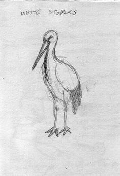 A sketch of a white stork