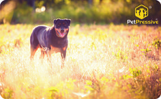Pet Names, Your Pet, Pets, Words, Animals, Names Of Animals, Animales, Animaux, Animais