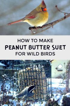 This homemade peanut butter suet recipe is for wild birds in the winter when food is scarce. Baby Bird Food, Wild Bird Food, Wild Birds, Feeding Birds In Winter, Suet Recipe, Suet Bird Feeder, Suet Cakes, Bird Seed Ornaments, Homemade Bird Feeders