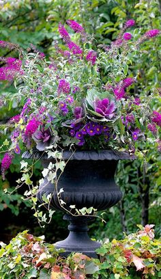 love this fall container! Get the recipe for this Gorgeous Butterfly-friendly container!Get the recipe for this Gorgeous Butterfly-friendly container! Container Flowers, Container Plants, Container Gardening, Flowers In Planters, Fall Flower Pots, Beautiful Gardens, Beautiful Flowers, Indoor Gardening Supplies, Gardening Tips