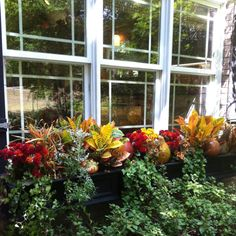 Window boxes for fall....Great idea to put down the middle of your dining room table!
