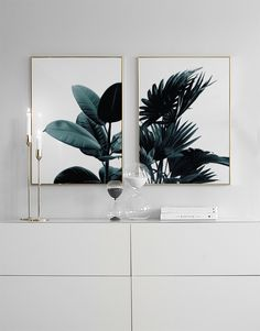Posters and prints with botanical photos and plants