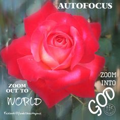 AUTOFOCUS ==========  Zoom OUT to the World Zoom INTO GOD  I saw a lovely red rose blooming in my garden today. I quickly took a picture of it being captivated by its beauty. I auto focussed my camera so I could look through clearly the details on how beautifully it has been created by our God. I was amazed and still am !!   As I write this , I feel God wants us to 'autofocus' our lives. We need to 'zoom in' to God... More ⬇️…