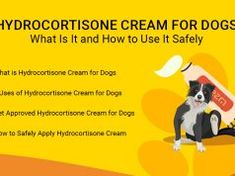 Hydrocortisone Cream for Dogs: What Is It and How to Use It Safely Meds For Dogs, Dog Nails, Dog Shampoo, Dog Biscuits, Havanese, Dog Harness, Dog Care, I Love Dogs, Homemade Dog Food