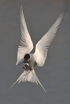 Home to beautiful species like the: Arctic Tern
