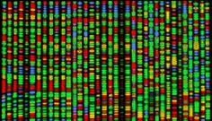 DNA array at Scholastic - free articles and pics