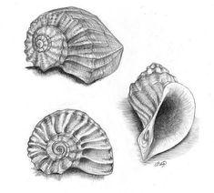 natural object drawing ile ilgili görsel sonucu