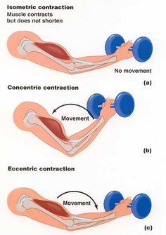 15 Best Bodyweight Exercises - Eccentric Training
