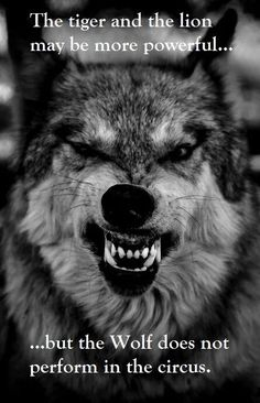 but the wolf...