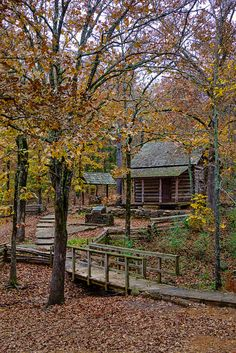 _LCH1306 woolly hollow