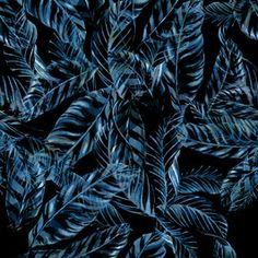 Dark Foliage by Camila Coelho