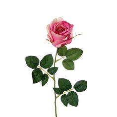 rose에 대한 이미지 검색결과