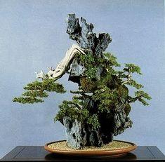 ARTE BONSAI: ¿Qué es Shohin Bonsai Bonsai y Mame?More Pins Like This At FOSTERGINGER @ Pinterest