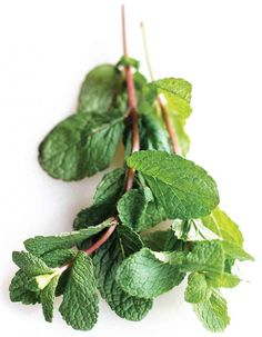 Everything you need to know about how to grow Mint, the many uses of Mint and then some!