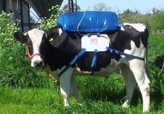 """Push For Cows That FART #Less... Slow """"#GlobalWarming""""..."""
