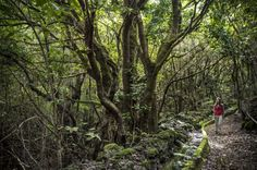 Top 10 Trails of Tenerife – the best routes Auckland, Canary Islands, So Much Love, Beautiful Islands, Tenerife, Trail, Good Things, Plants, Nature