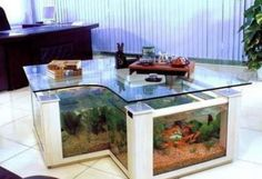 awesome aquariums fish tanks