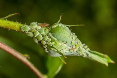 Aphid Spray, Live Ladybugs, Get Rid Of Aphids, Garden Design Magazine, Beneficial Insects, Gardening For Beginners, Gardening Tips, Texas Gardening, Gardens