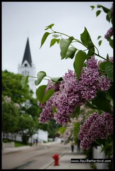 Mackinac Island during lilac season!  Was sure to include the Lilac Festival in my novel, SHADOWBROOK MANOR: Mackinac Island's Mysterious Cottage... If you love Mackinac Island and a good ghost/timetravel/romance, then you gotta give it a read! Available on Kindle and Nook.
