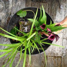 El blog de Los Peñotes: un mini estanque en 4 pasos.