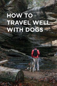 How to Travel with a Dog - Essential Dog Travel Tips // http://localadventurer.com