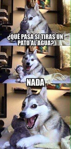 #gracioso #divertido