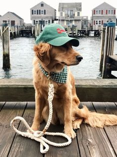 The Doggie of the Docks! It's Bennie the Golden Retriever, beloved loyal pet and also the mascot of Rhode Island fashion brand Kiel James Patrick, run by Kiel and his wife Sarah Vickers in Pawtucket. Follow Bennie at @puffinandbennie on Instagram. #goldenretriever