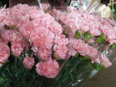 Detalle de claveles rosas en bolsas cónicas de plástico para su mejor conservación y traslado