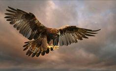 Deuteronomium 32:11  11 Zoals een arend waakt over zijn nest en voor zijn jongen de vleugels uitspreidt, zo heeft de Heer hen op zijn vleugels genomen en hen op zijn wieken gedragen.  Deuteronomy 32:11  11 As an eagle stirreth up her nest,  fluttereth over her young, spreadeth abroad her wings,  taketh them, beareth them on her wings: