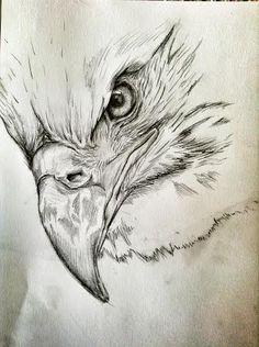 Bald Eagle by ZhakwanArt on DeviantArt Cool Art Drawings, Pencil Art Drawings, Bird Drawings, Realistic Drawings, Art Drawings Sketches, Eagle Sketch, Bird Sketch, Eagle Drawing, Eagle Painting