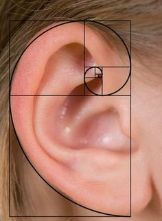 The Golden Spiral expressed in the human ear Human Ear, Human Body, Human Human, Geometry Art, Sacred Geometry, Nature Geometry, Geometry Tattoo, Fibonacci Sequence In Nature, Fibonacci Golden Ratio