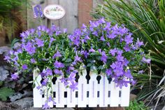 Potted Campanula - could use clementine box and paint sticks Wooden Orange Crates, Garden Crafts, Diy Crafts, Fence Planters, White Picket Fence, Painted Sticks, Garden Inspiration, Outdoor Living, Recycling