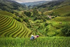 Mu Cang Chai rice fields are among the most spectacular in Vietnam. You just have to climb up any path to the mountains. After many hours of walking I finally found a person at the indicated site