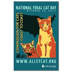 Caring for Feral Cats in the USA