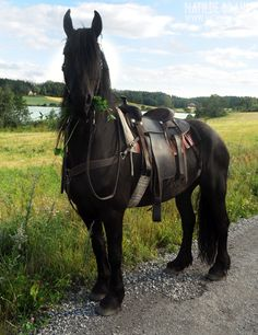 *gasp* Just imagine.. finding this fully-tacked beauty on the side of a road, with your name on it and riding away free from all our troubles..