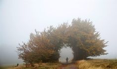 Michael Reichel / AFP - Getty Images  A hiker walks through the fog on the Rennsteig hiking trail near Masserberg, eastern Germany, on Oct. 16. The Rennsteig is a 105-mile long ridge walk across the Thuringian and Franconian forest, that attracts tourists and hikers.
