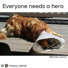 dogwoofies: #Repost @fuckyou_iamcat with @repostapp  Doesnt matter who you are you can always make a difference.