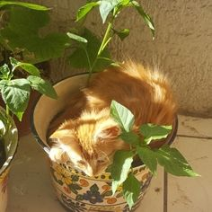 cottagehonaey: todays a kitty kinda day Animals And Pets, Wild Animals, Film Photography, Peace And Love, Flower Power, Farmer, I Am Awesome, Planter Pots, Kitty