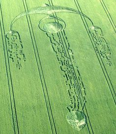 A Swallow Crop Circle With Mayan Hieroglyphics connected to the head of an Extraterrestrial / Alien Being, appeared on 27th June 2009 at South Field near Alton Priors, Wiltshire.