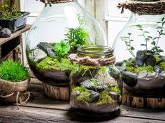 Terrarium Diy, Terrarium Plants For Sale, Terrarium Bowls, Terrarium Scene, Mason Jar Terrarium, How To Make Terrariums, Plantas Indoor, Decoration Plante, Terraria